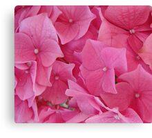 Hydrangea - Close up Canvas Print