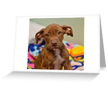 Pit Bull Mix Puppy  Greeting Card