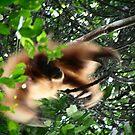 Orangutan 1 by fab2can