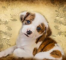 Cutest Puppy Mix Breed  by Peggy Franz Animal and Rescue Photography
