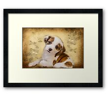 Cutest Puppy Mix Breed  Framed Print