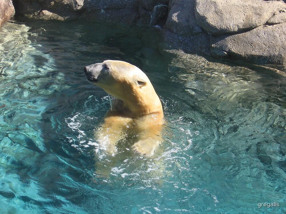 Polar Bear by gregalls