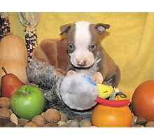 Uno Gets The Turkey !! Photographic Print