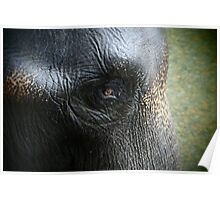 Elephant eye Poster