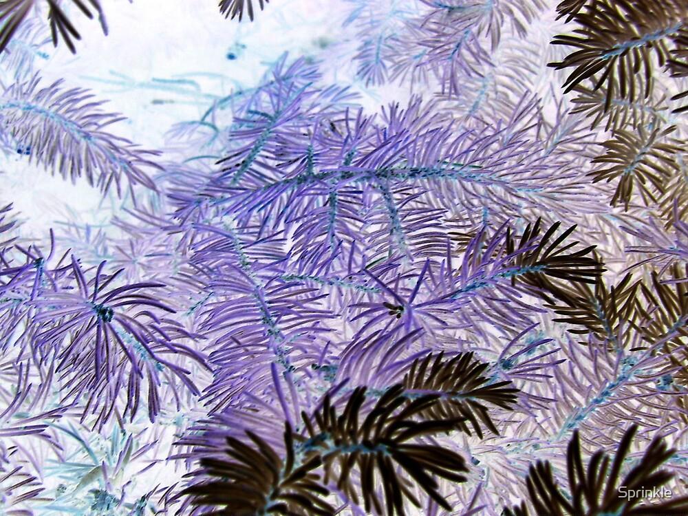 Inverted Pines by Sprinkle