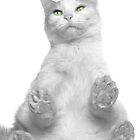 Enlightened Cat by Jim  Hughes