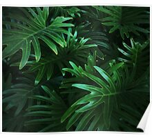Jungle Leaves Poster