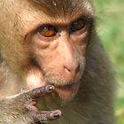 Punky Monkey by Aaron Horwitz