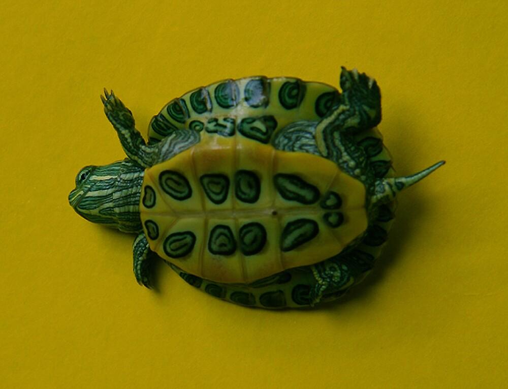 Sunbathing turtle by ilkalora