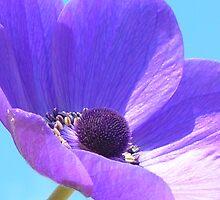 Purple Anenome On Blue Sky by Justine Butler - daisybluesky.co.uk Tel: 07969 444962