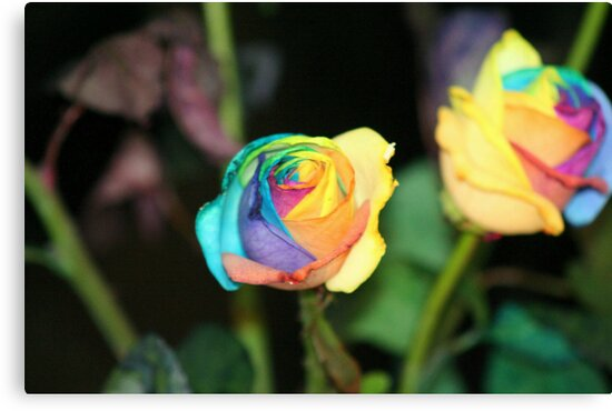 Multi-Color Roses by royce