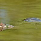 Snapping Turtle by levipie