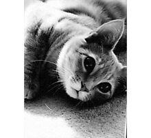 Kitty-Kitty Photographic Print