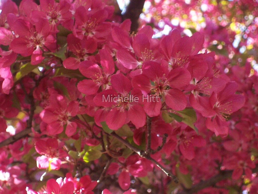 Spring Flowers by Michelle Hitt