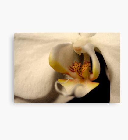 Macro Orchid Canvas Print