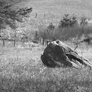 Turtle Head Rock by Gary L   Suddath