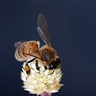 Honey Bee on flower by Lesley Smitheringale