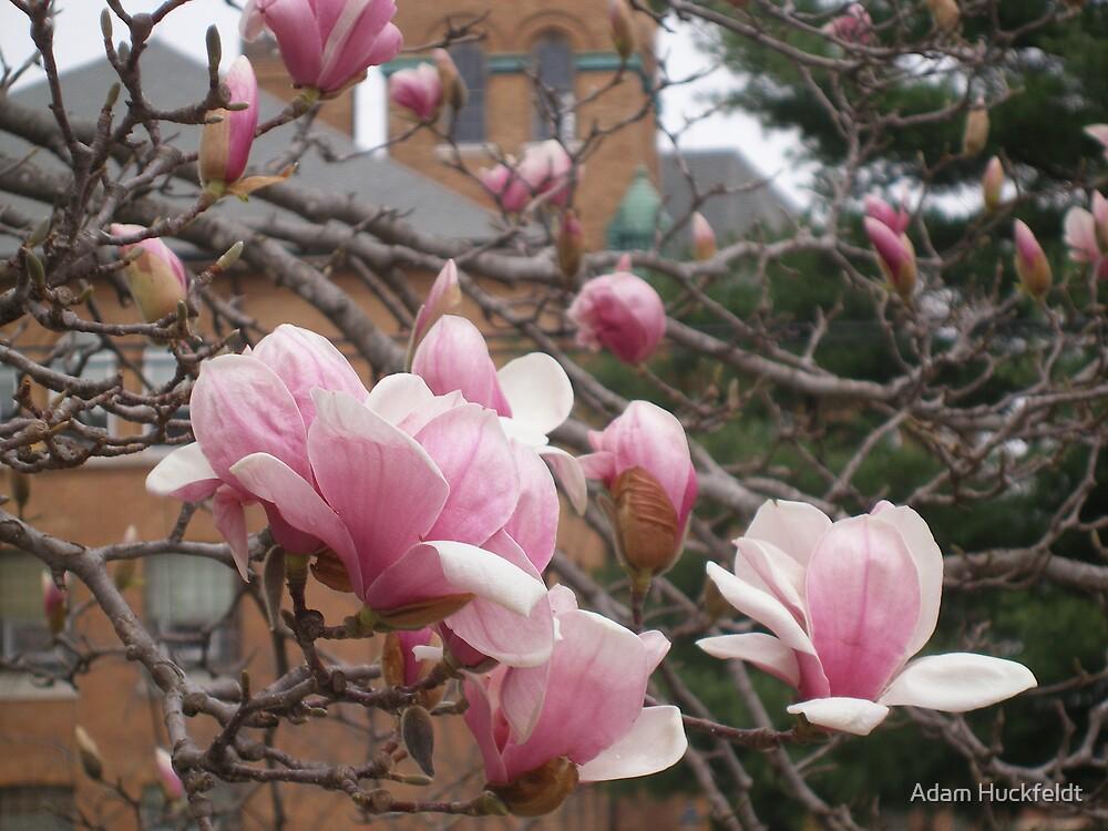 The Blossoms of Spring by Adam Huckfeldt