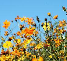 Burst of Sunshine by Lesley Smitheringale