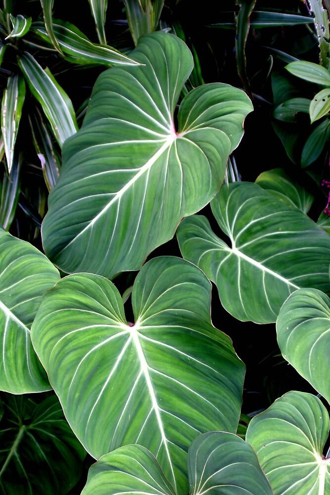 Leaves by Danielle Kennedy Boyd