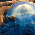 Jellyfish by Marianne