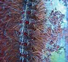 Caterpillar by j3sss