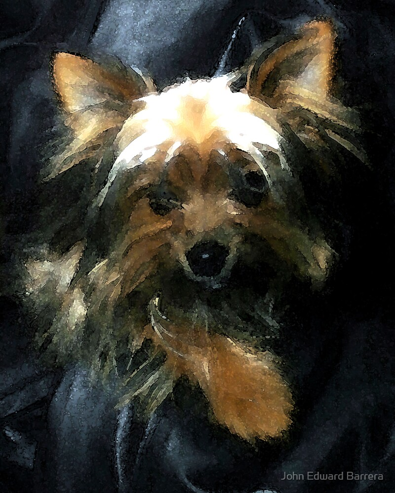 Yorkie in Watercolour by John Edward Barrera