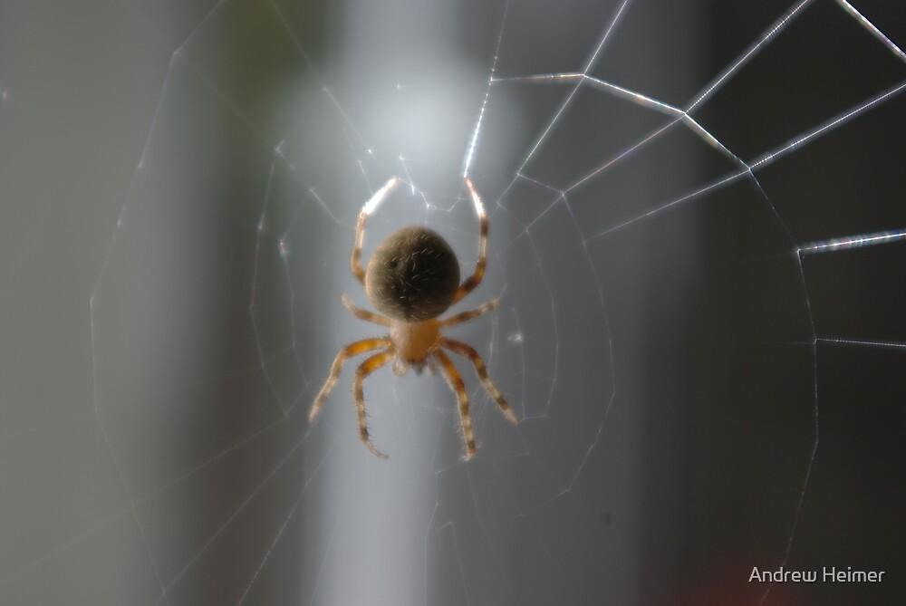 Spider I by Andrew Heimer