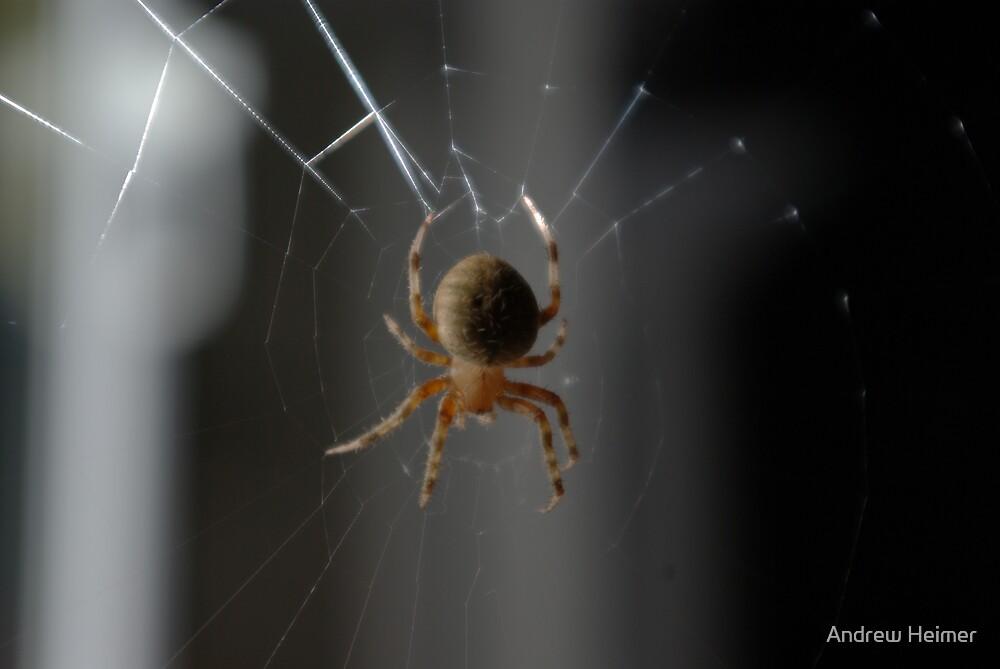 Spider IV by Andrew Heimer
