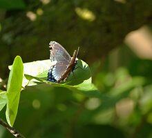 Butterfly II by Andrew Heimer