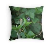 I'm A Humming Bird Throw Pillow