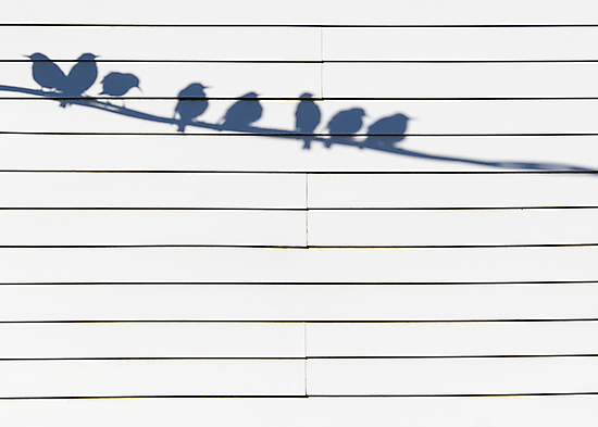 Birds on a Wire by David Librach - DL Photography -