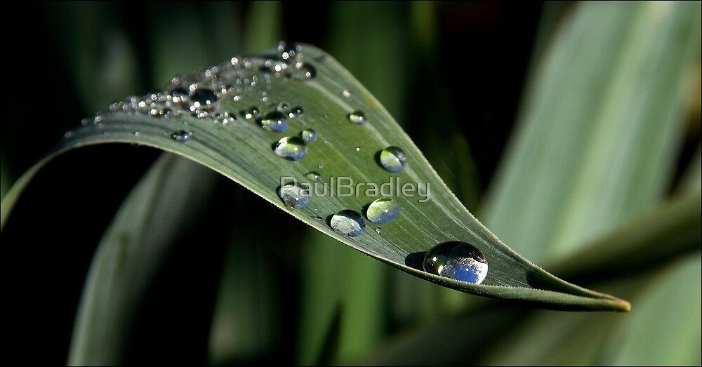 Droplets by PaulBradley
