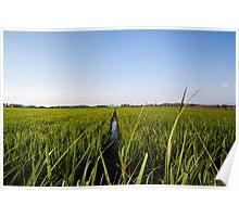rice paddies Poster