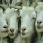 selfie sheep by maeztrow