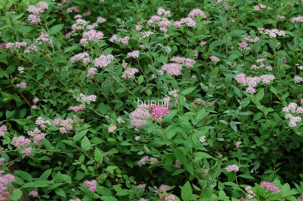 Field of Pink Flowers by bunnij
