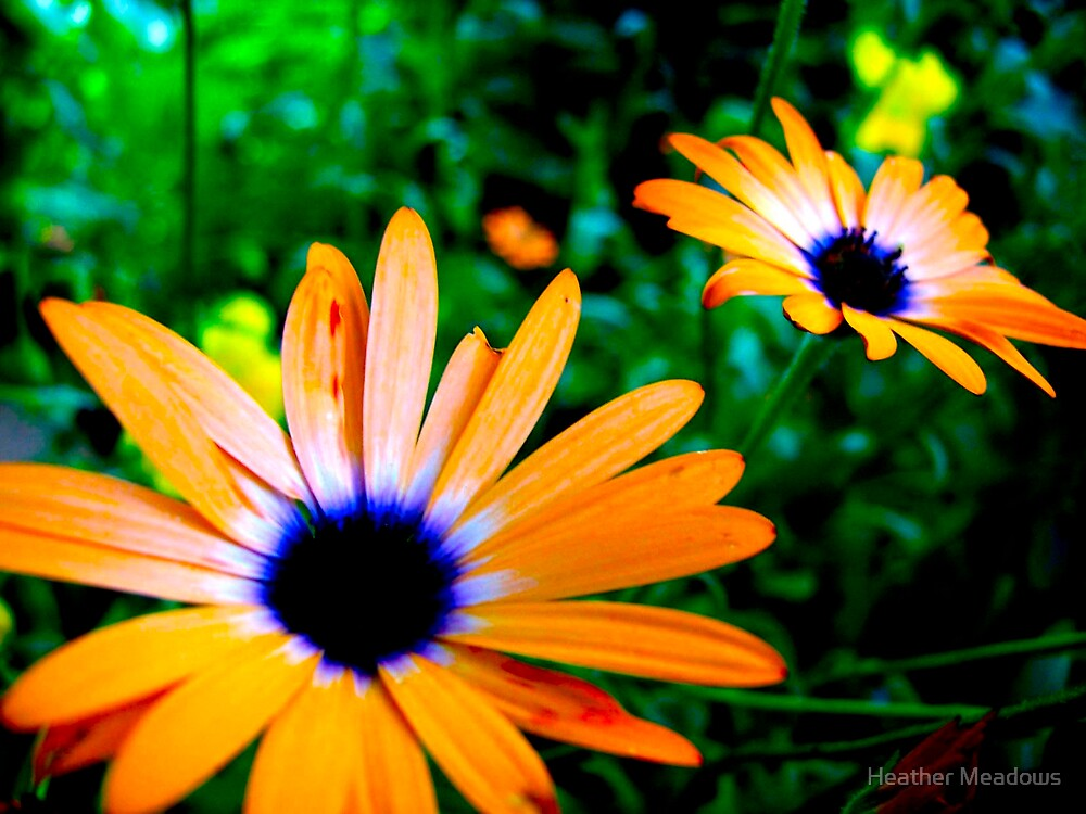 Flowers by Heather Meadows