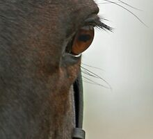 Horse's Eye (Phone) by Furtographic