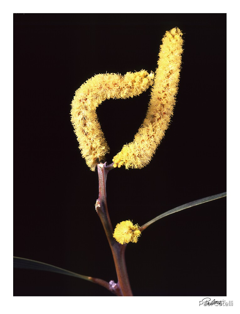 "'Wattle' from the series ""Inner Bloom"" by Paul Cotelli"