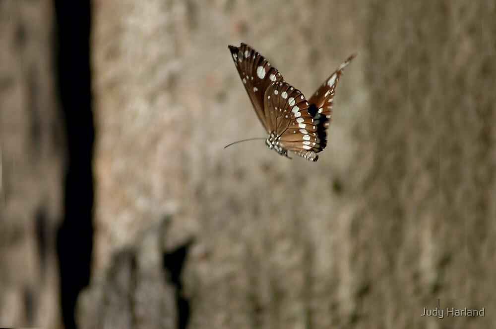 Australian Crow Butterfly by J Harland