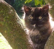 Kitten by vicki88