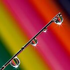 Needleye by AJM Photography