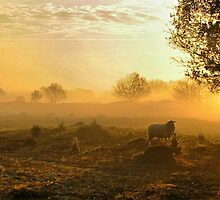 Sheep in Glorius Morning light by ienemien