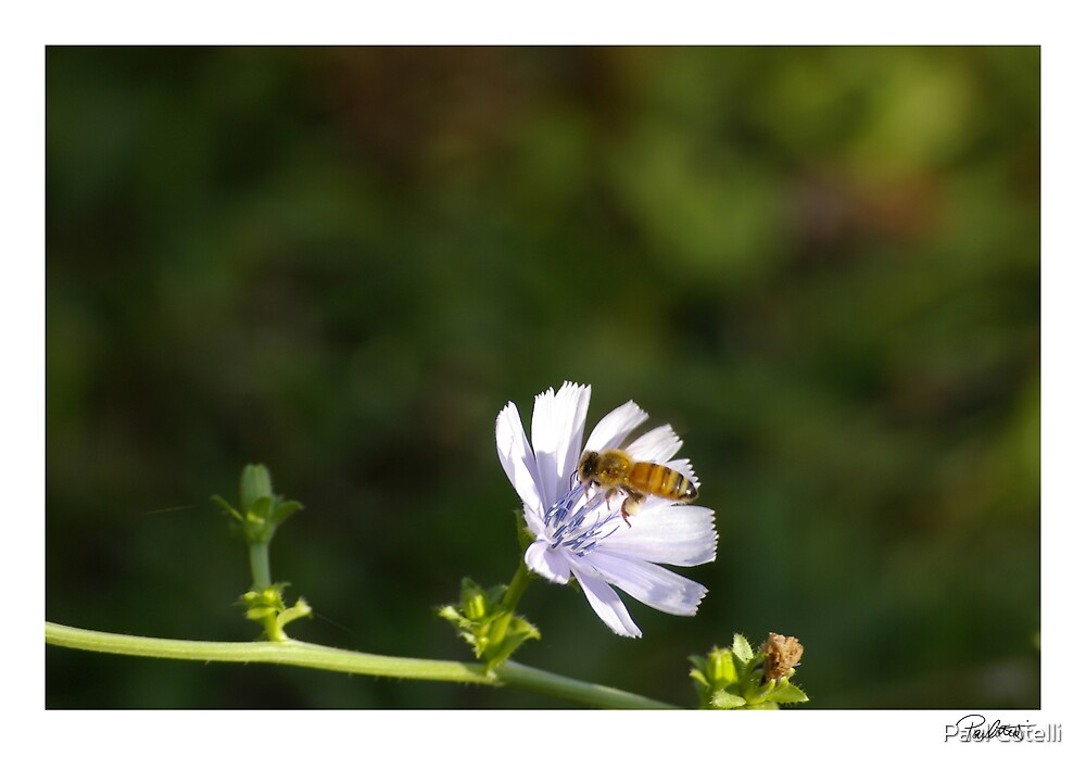 Bee by Paul Cotelli