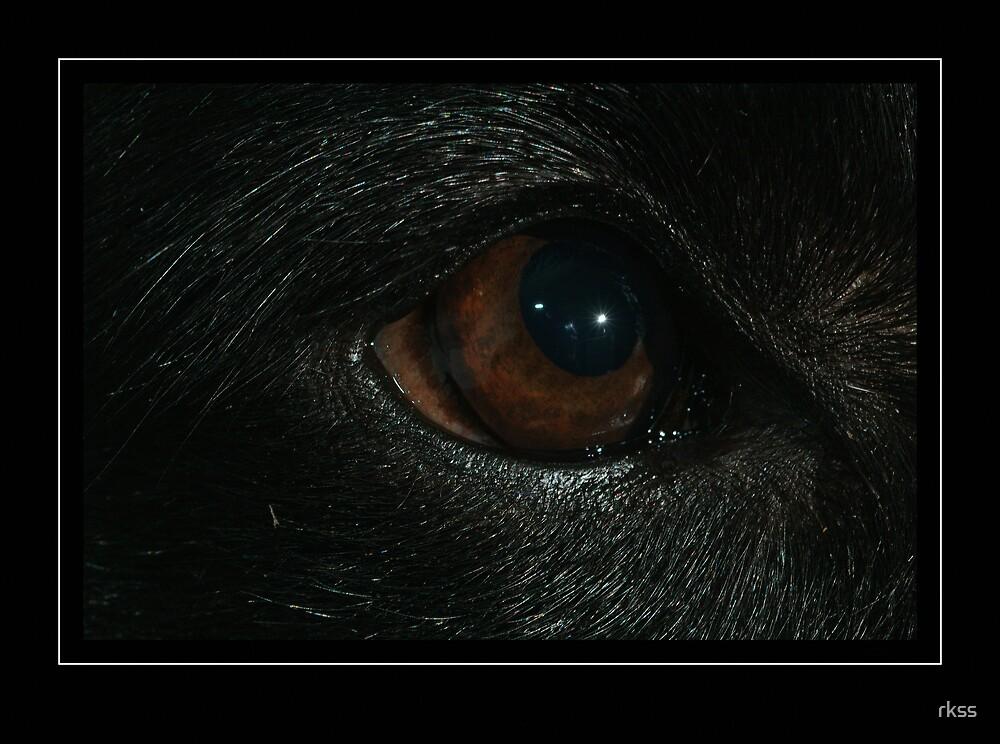 Groenendael eye by rkss