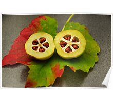 Colours Of Fall - Halves Of A Quince Poster