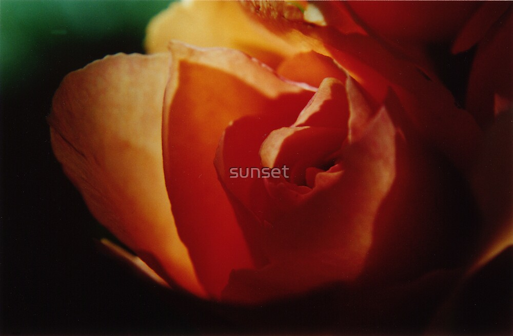 rose-gold by Sam Van