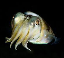 Cuttlefish by allyazza