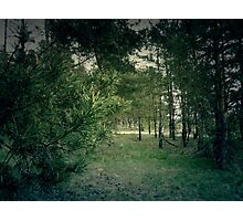 Pine Forest 4 Photographic Print