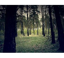 Retro Pine Forest 4 Photographic Print